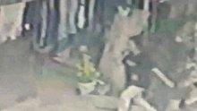İstanbul'da pitbull dehşeti! 16 yaşındaki kız 56 adet dikiş atıldı
