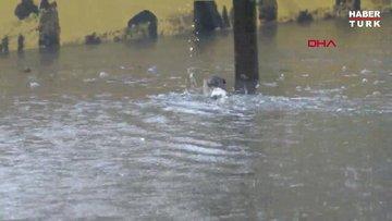 Topkapı'da su birikintisinde kedinin çırpınışları... ölümden kurtaran yardım
