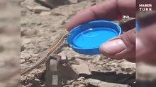 Sıcakta bitkin düşen kertenkeleye kapakta böyle su içirdi