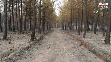 Muğla'da ormanlar alev alev yandı! Tahribat gün aydınlanınca ortaya çıktı