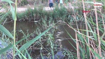 Mersin'de derede toplu balık ölümü tedirginliği