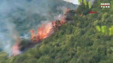 Sarıyer'de orman yangını!
