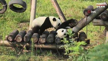 Pandaların oyunu ilgi topladı