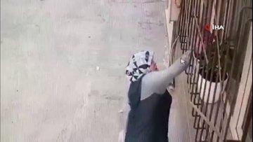 Camdaki çiçeği saksıdan söküp çalan kadın kamerada