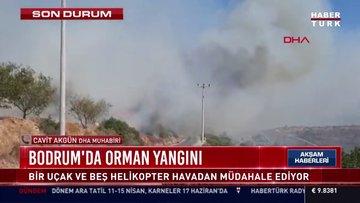 SON DAKİKA... Milas ve Bodrum'da orman yangınları!