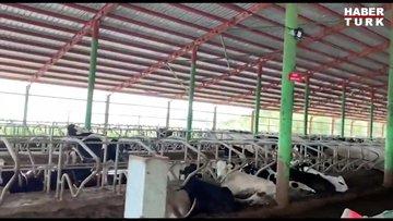 Süt üretimi aşamalarına yerinde bakış