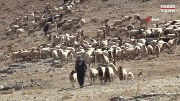 5 bin lira maaş ile çalışacak çoban bulamıyorlar
