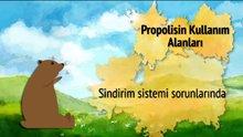 Propolis nedir? Propolisin faydaları nelerdir?